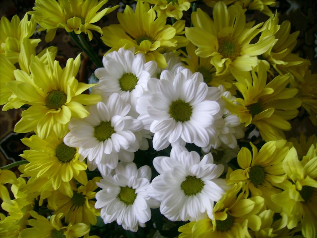 2422 галерея головна квіти квіти