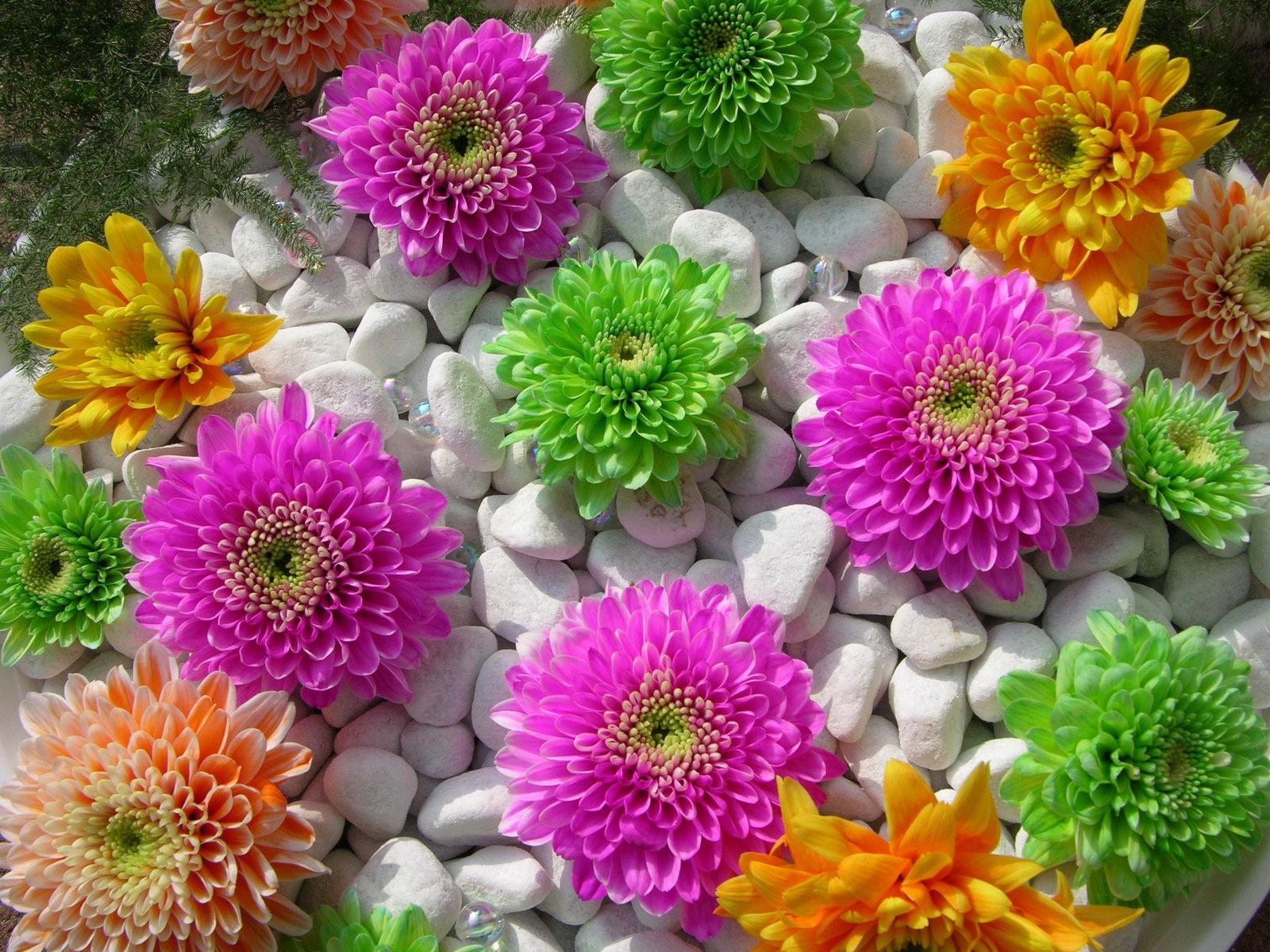 2401 галерея головна квіти квіти