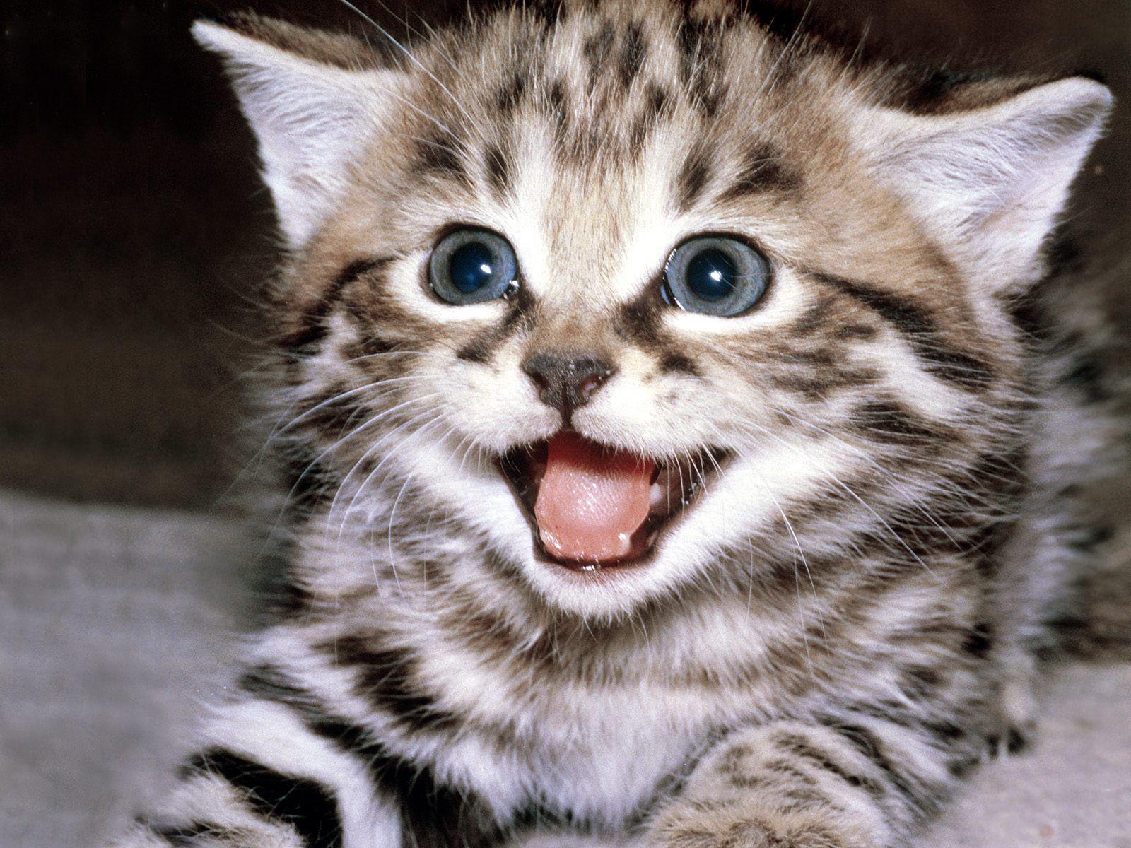 CAT MAT.