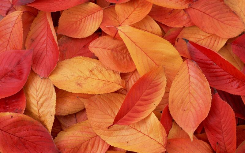Яскраве осіннє листя