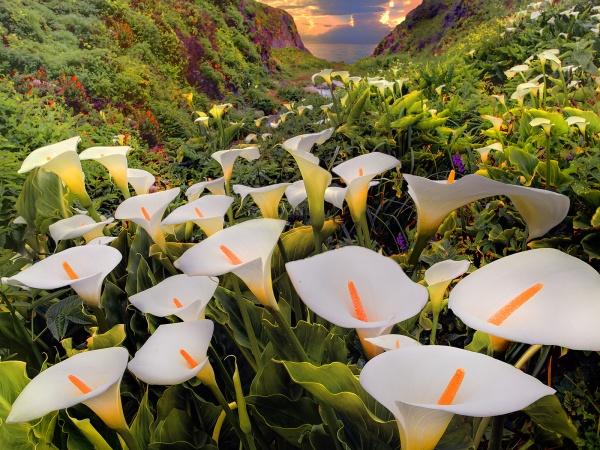 Долина квітів