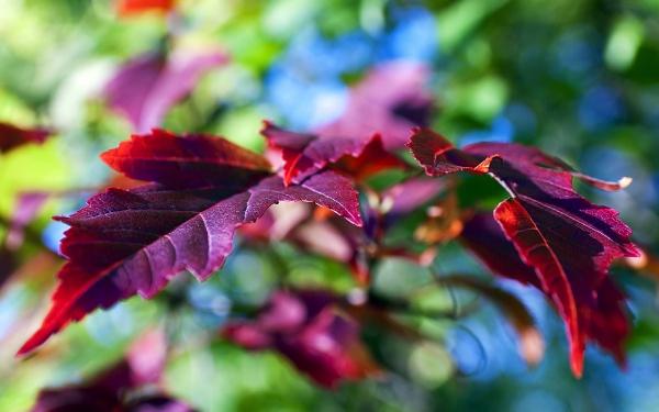 Різнокольорова осінь