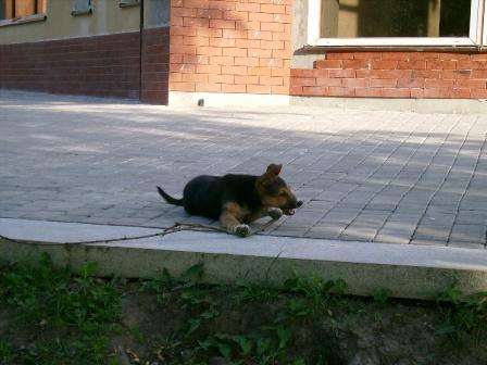 Злий собака :)