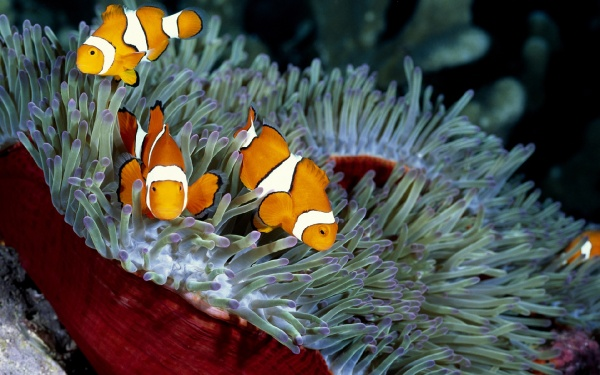 Морські рибки