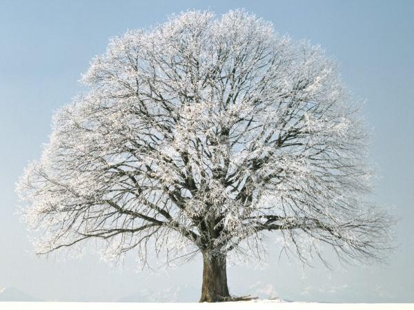 Зимове дерево