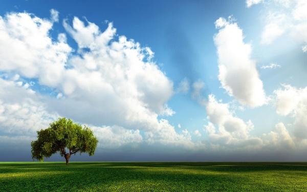 Одиноке дерево