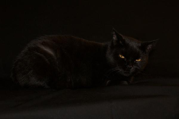 черный на черном