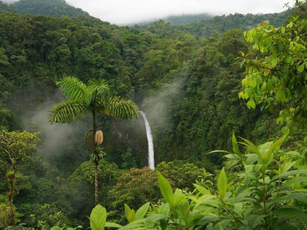 Тропічний рай