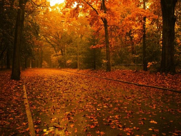 Осіння алея