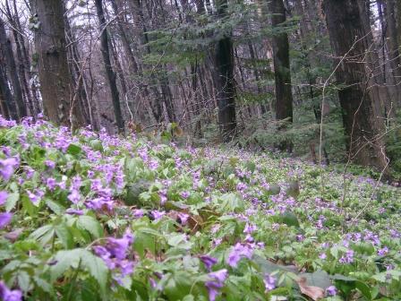 Квітучий ліс