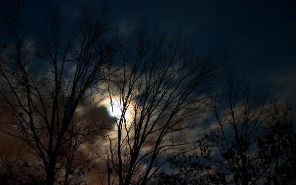 Сутінки в лісі