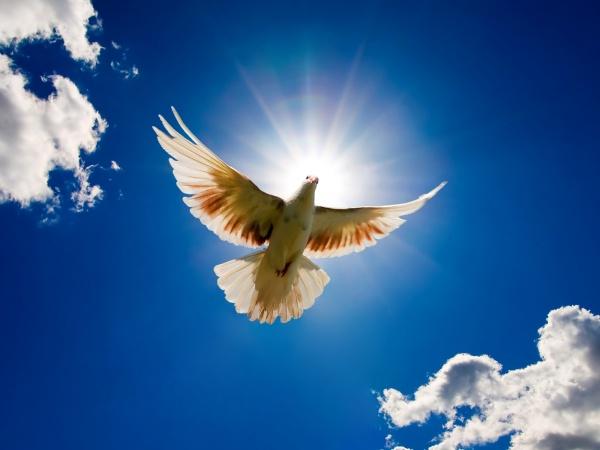 Голуб миру