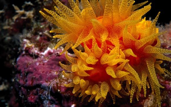 Мешканці підводного царства