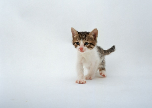Маленьке кошенятко
