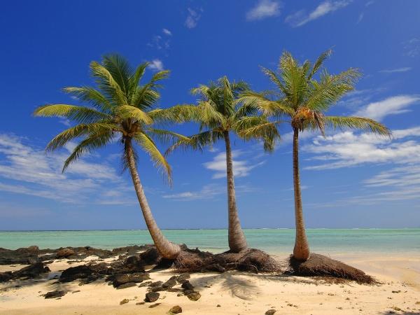 Пальми, море, пляж