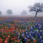 Квіткова поляна