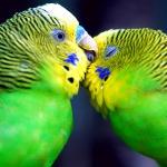 Папуги