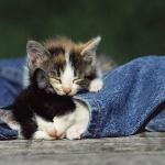 Малята-кошенята