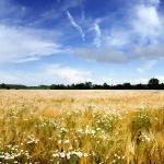 Літній пейзаж