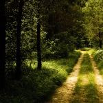 Лісова доріжка