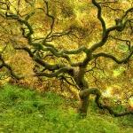 Чудернацьке дерево