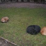 Сплячі песики