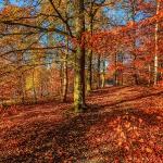 Барвиста осінь