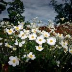 Біленькі квіти