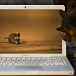МакБук миша