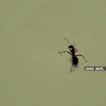 Одна мураха